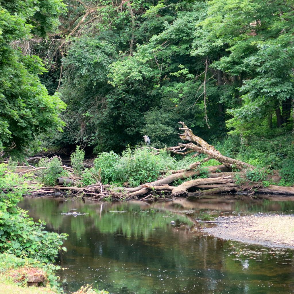 Assabet River, West Concord, Mass.