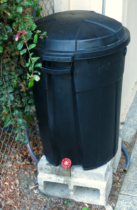 Failed rain barrel made of a trash barrel; note bulging sides